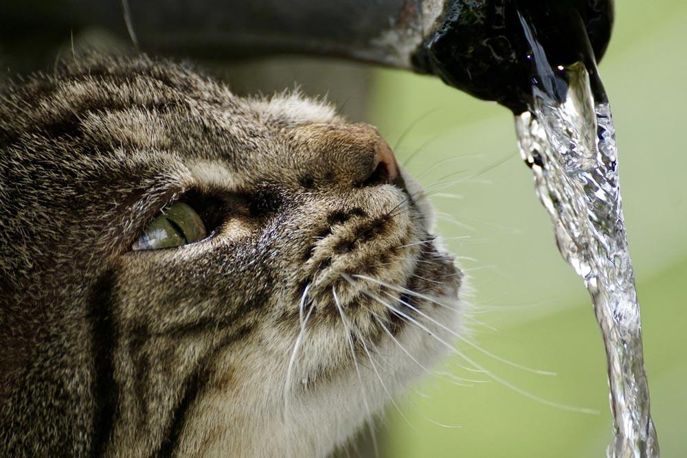 Ist unser Leitungswasser auch empfehlenswertes Trinkwasser? Oder sollte man Mineralwasser bevorzugen?