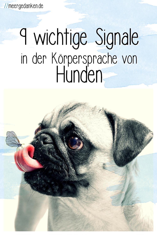 Hier erfährst du 9 wichtige Signale der Körpersprache von Hunden, die man kennen sollte um seinen eigenen oder einen fremden Hund zu verstehen.