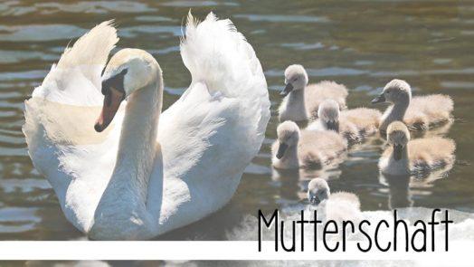 Es gibt drei Arten von Müttern: Mütter, Muttis und Mamas. Sie sind alle ganz verschieden, aber haben eines gemeinsam: Die Liebe zu ihren Kindern. Wunderbar!